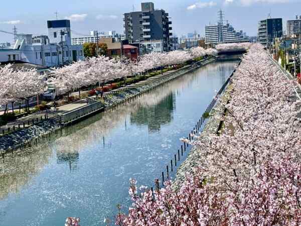 桜満開!笑顔満開!